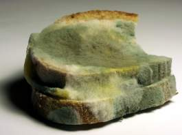 mold-poisoning-foods-9-practical-ways-to-protect-yourself-from-black-mold-toxic-in-winter.jpg